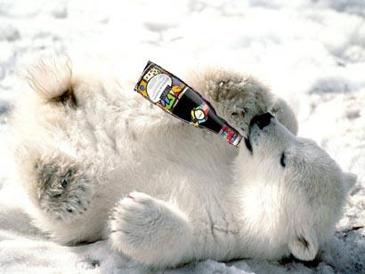 polarbearbojo