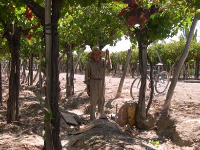 vineyard21.jpg