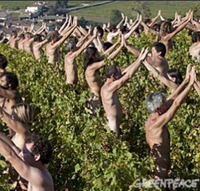 nude vineyard