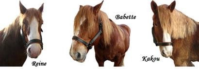 pontet canet horses