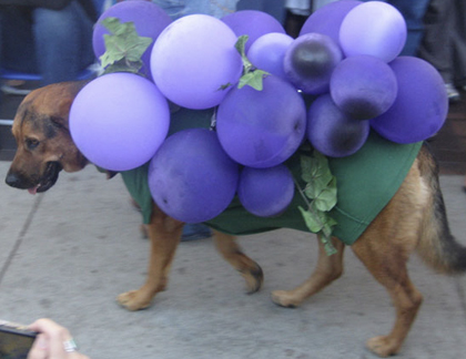 grapes dog