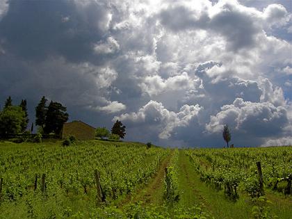 storm vineyard
