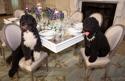 white_house_dogs