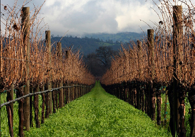 vineyard_cali