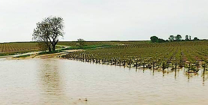 burgundy_flooding